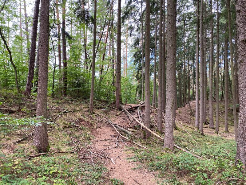 Fürther Stadtwald – Blockierte Wege